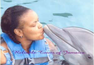 Swimming with the Dolphins at Dolphins Cove in Ocho Rios